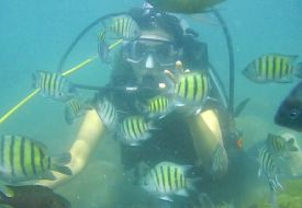 scuba-diving-sample-video-goa-grande-bat-island-card-img-1